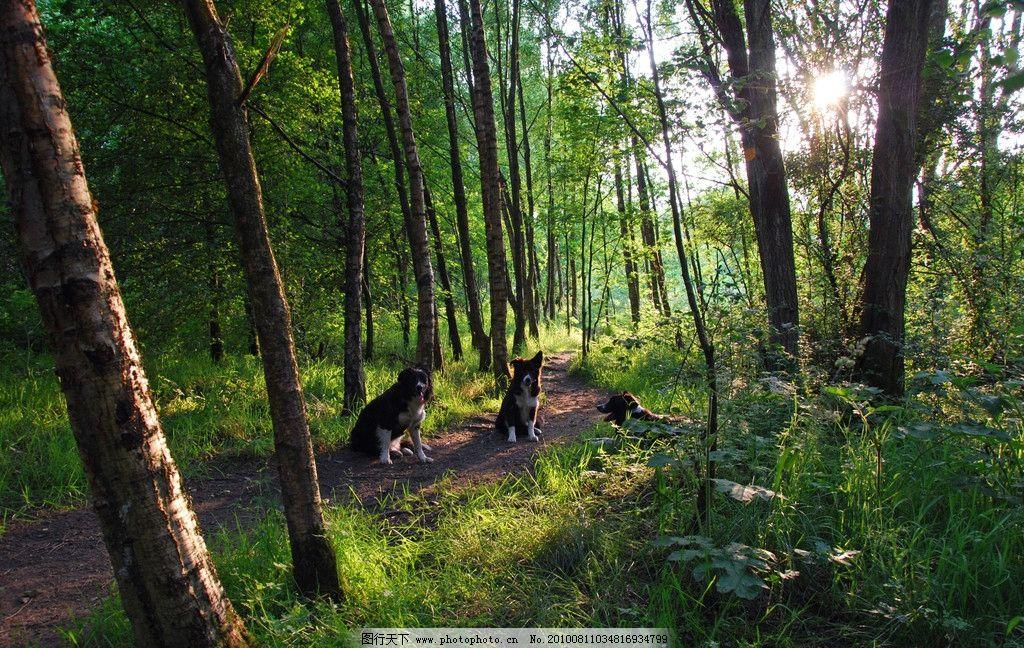绿树 自然 风光 自然风光 大树 树干 绿色 树林 线条 风景 丛林风景