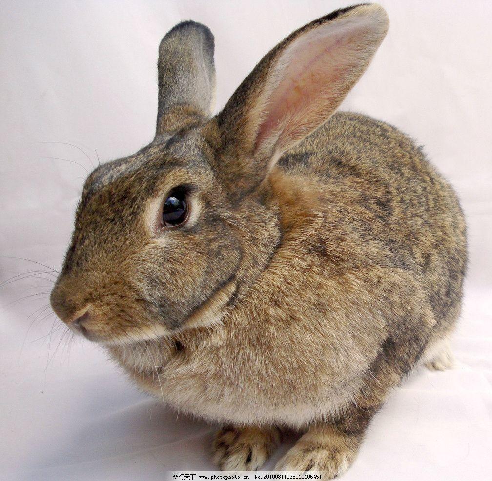 壁纸 动物 兔子 1008_987