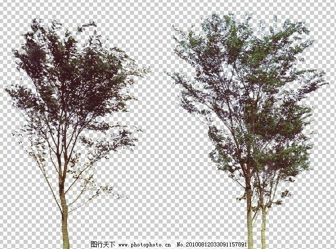 景观乔木手绘顶视图