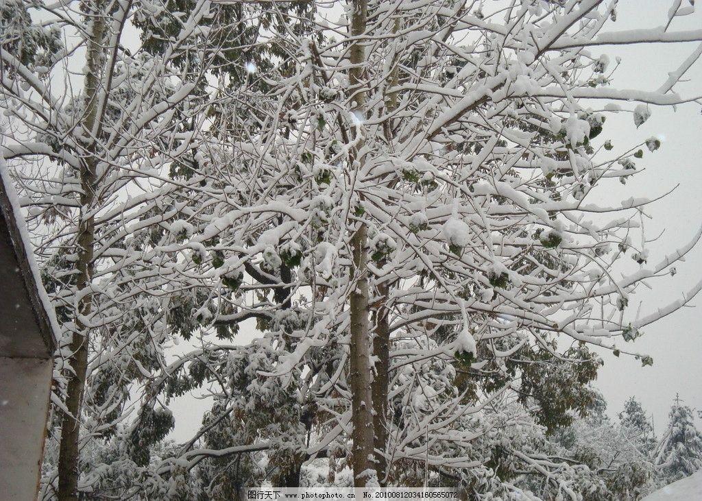 雪景 雪树 雪 树木 下雪 白雪 冬天 白色世界 结冰 自然风景 旅游摄影