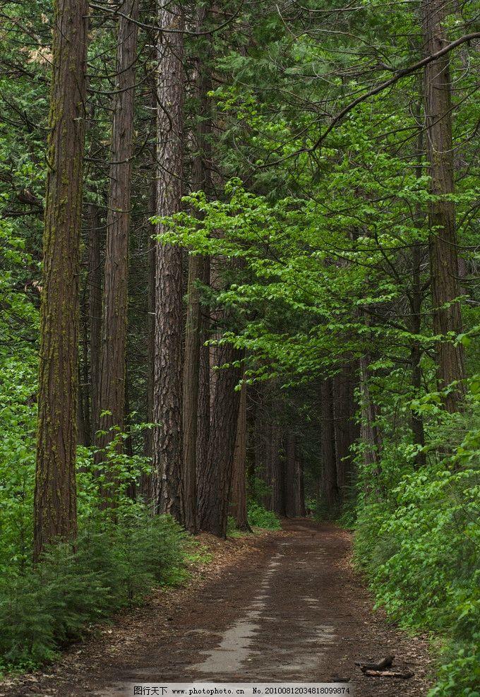 柏树大道 柏树 森林 树林 行道树 自然风景 自然景观 摄影 72dpi jpg