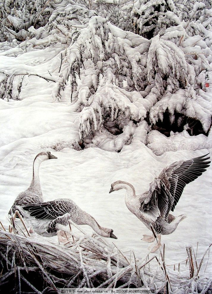 雪地之鹅 画 中国画 工笔画 动物画 现代国画 鹅 大灰鹅 觅食 雪地