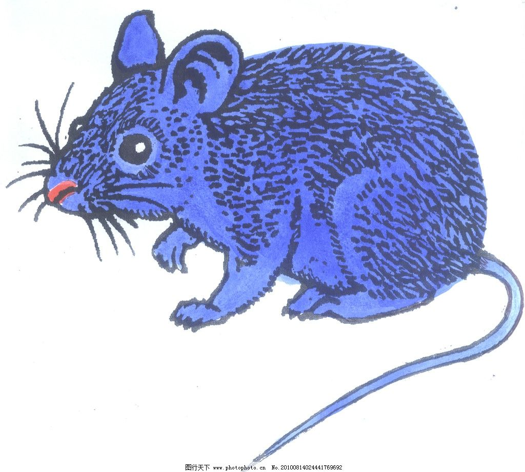 十二生肖 鼠 生肖 小鼠 野生动物 生物世界 设计 300dpi jpg