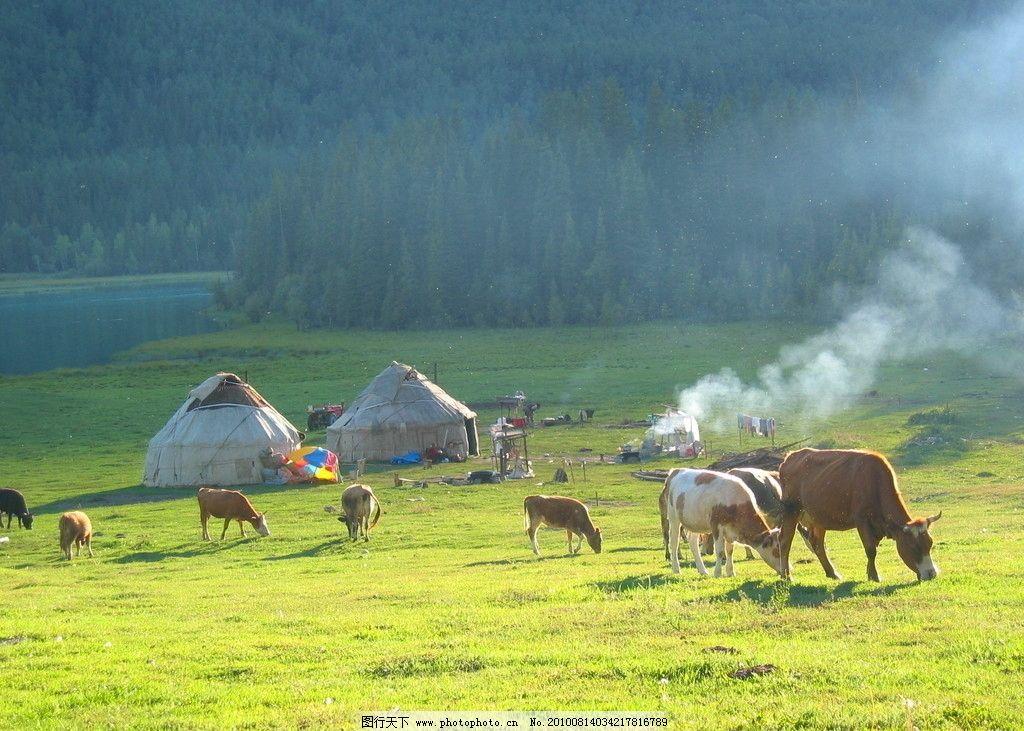 贵州风土 绿野风景 野炊 牛 帐篷 野外 贵州游 自然风景 自然景观