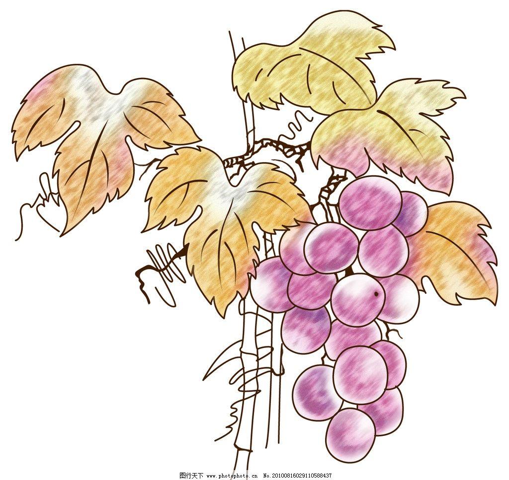 葡萄 手绘 包装设计 广告设计模板 源文件