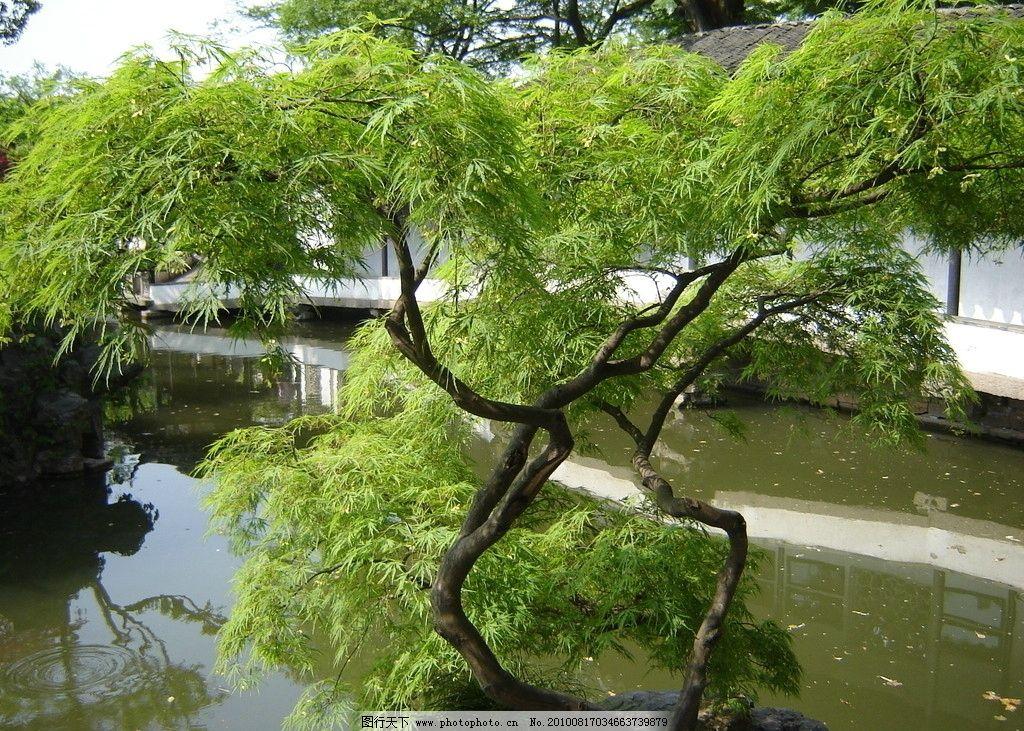 苏州园林 拙政园 植物 自然风景 摄影