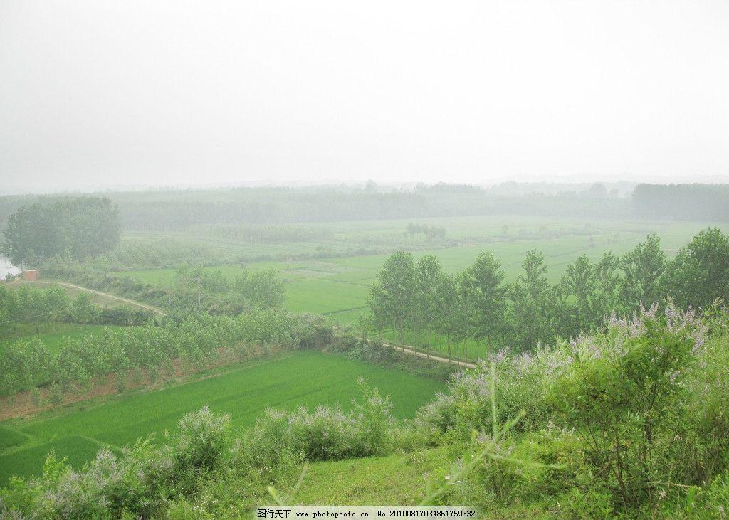 绿色田园 乡间小路 白杨树 稻田 树林 紫色的花 自然之景 摄影