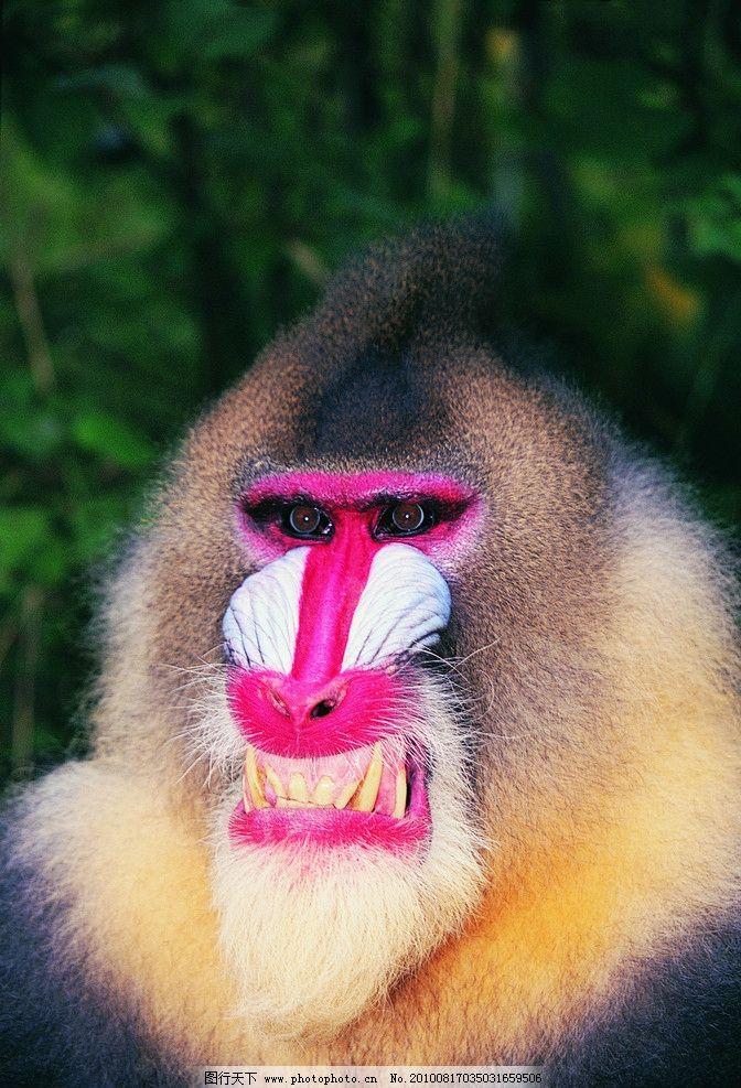 狒狒 野生动物 生物世界 摄影