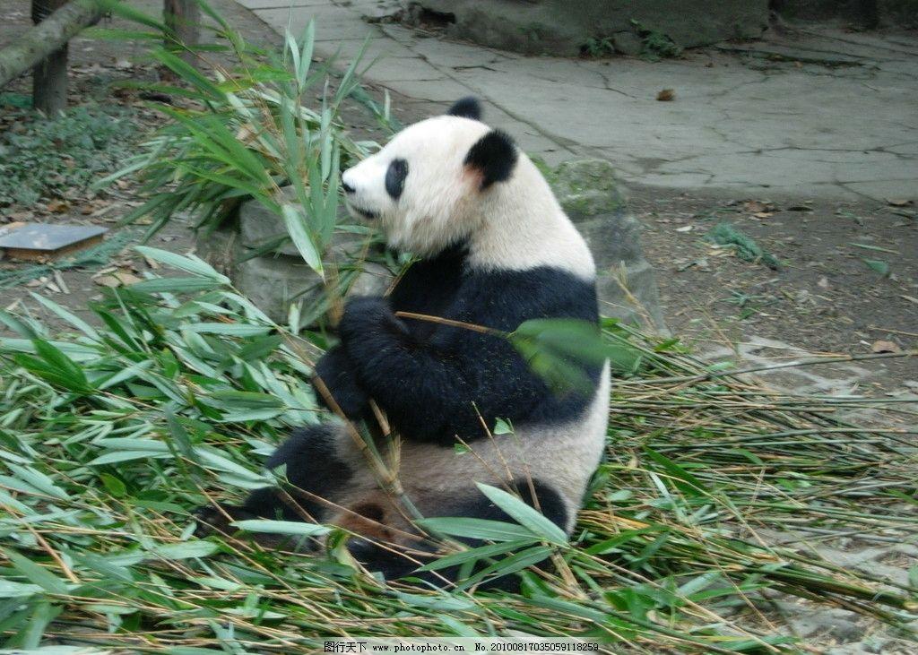 熊猫25mf16型彩电行扫描电路图