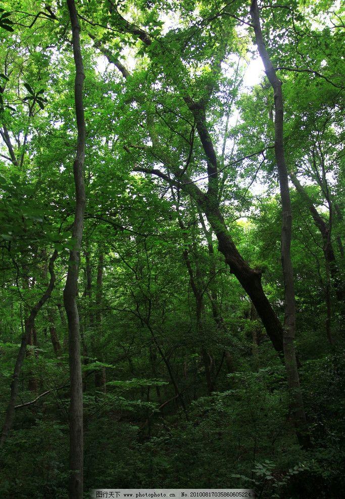 树林 树 树叶 夏天 植物 树木树叶 生物世界 摄影 72dpi jpg图片