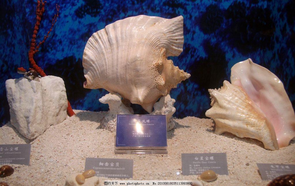形态各异的海螺 海洋 西沙群岛 永兴岛 南海 海龟 贝壳 珊瑚