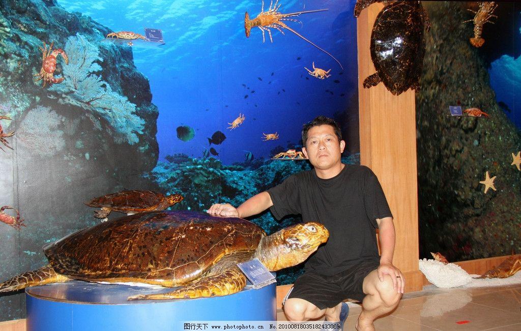巨型海龟 海洋 西沙群岛 永兴岛 南海 海洋生物 海龟 贝壳 珊瑚 海鸟