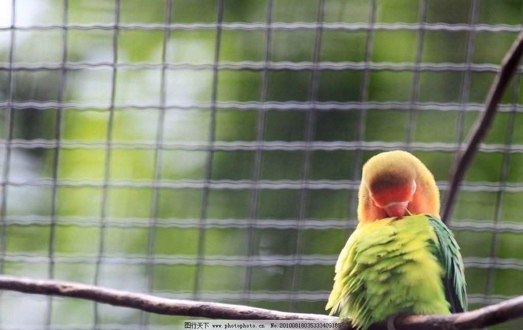 鹦鹉 动物 摄影图库 鸟类 绿鹦鹉 小鹦鹉 鸟笼 动物园 生物 自然 生物