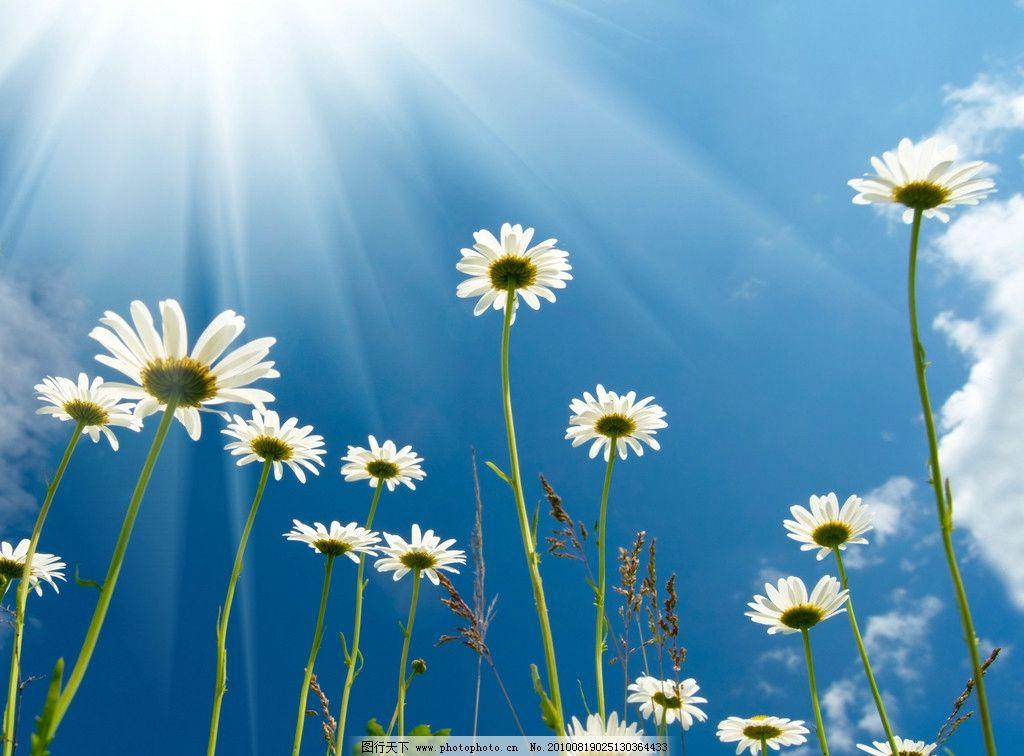 花朵里的种子简笔画
