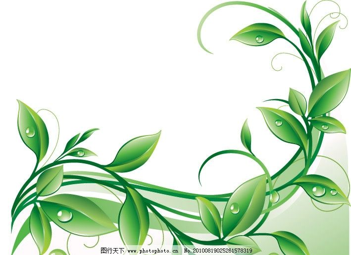 绿叶 水珠 植物 水滴 树枝 矢量 植物主题 树木树叶 生物世界 eps