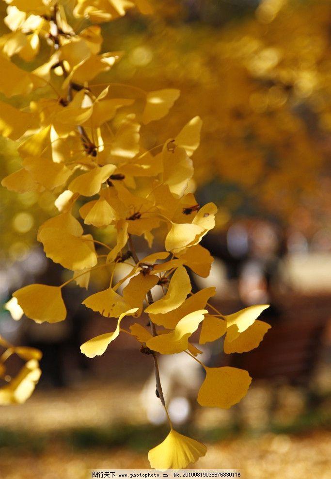 秋叶 秋色 秋天 秋天景色 树木 树枝 自然 风光 自然风光 特写