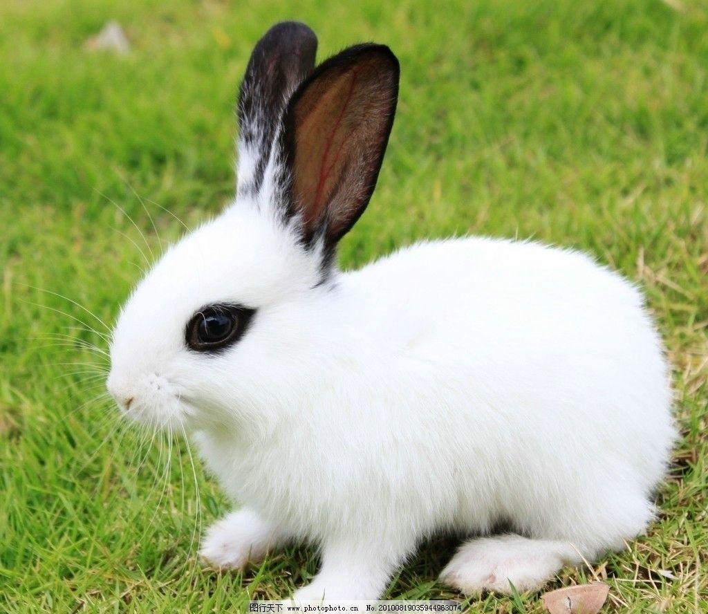 小白兔动物图片大全
