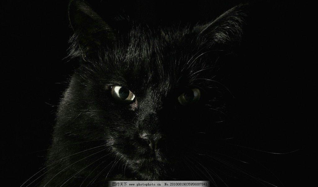 孤独黑猫背影手绘