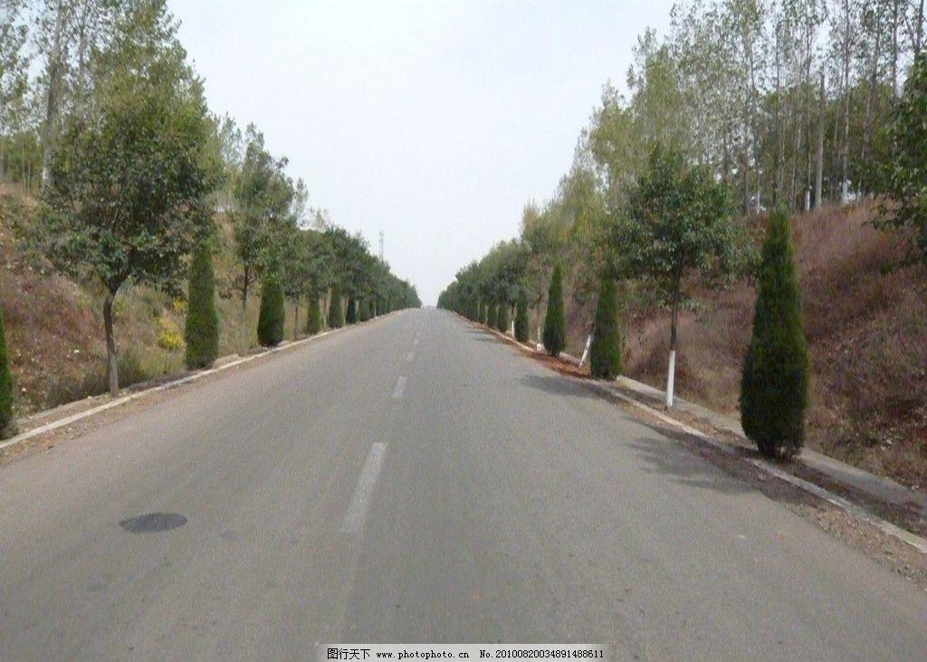 公路 公路风景 风景 树图片