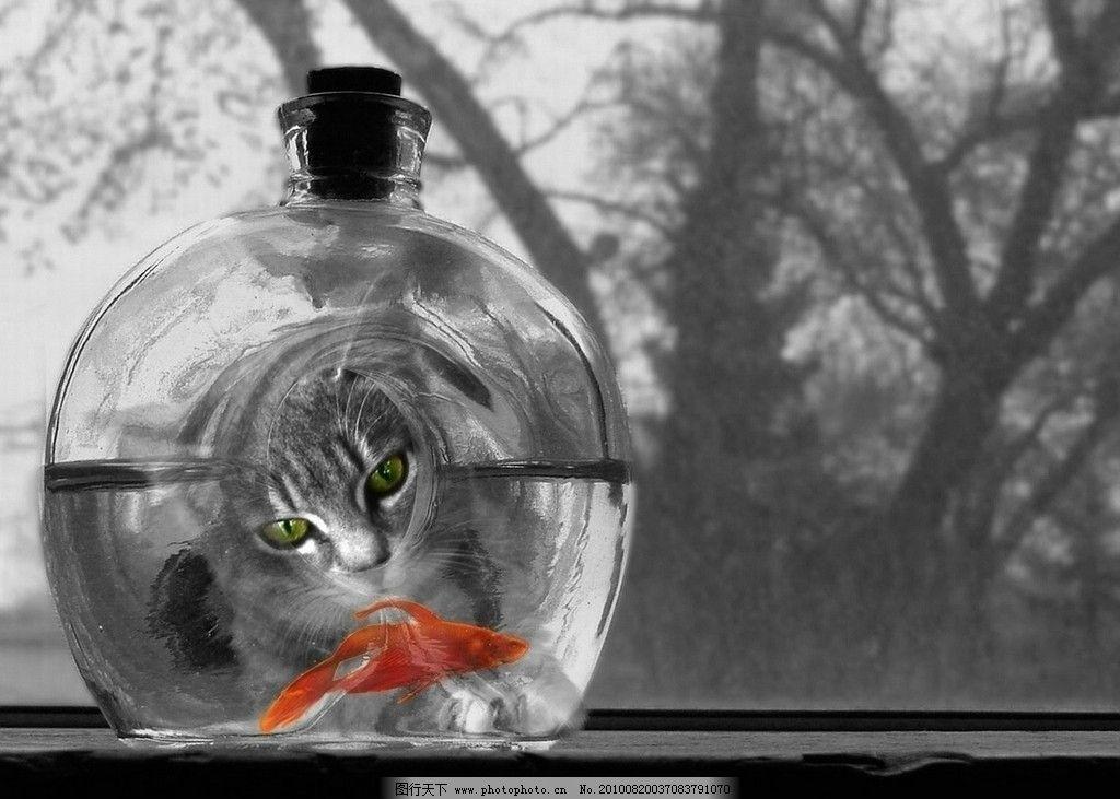 金鱼缸 生物 金鱼 玻璃 水面 窗体 可爱 宠物 海洋 生活素材 生活百科