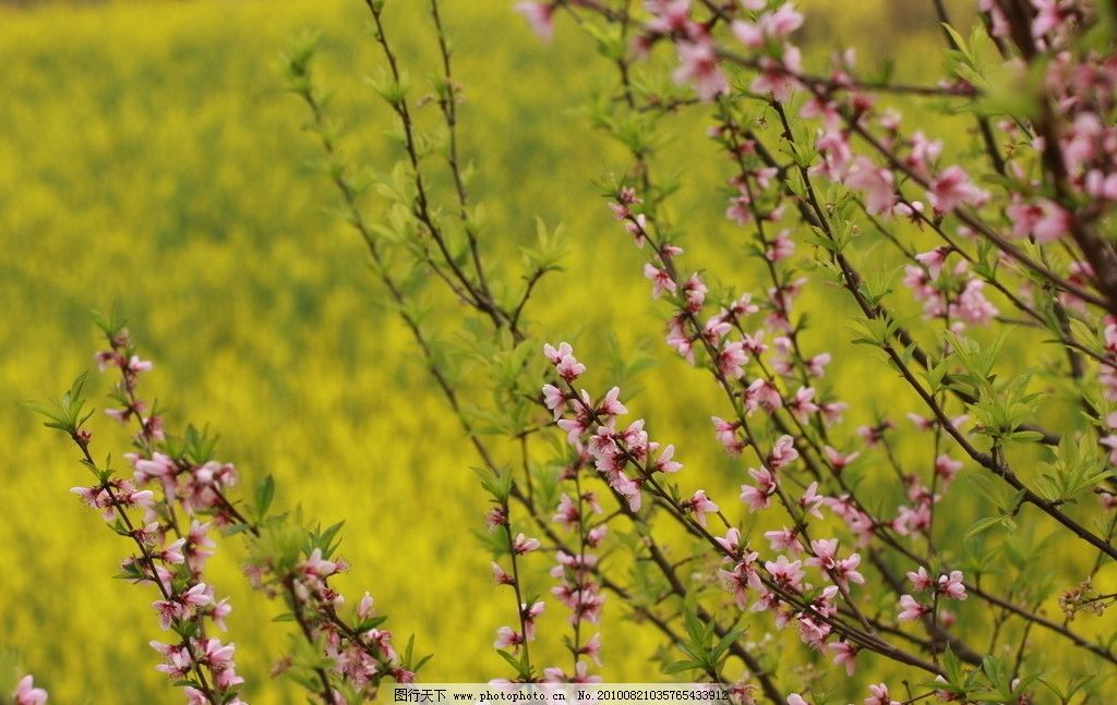 春花图图片