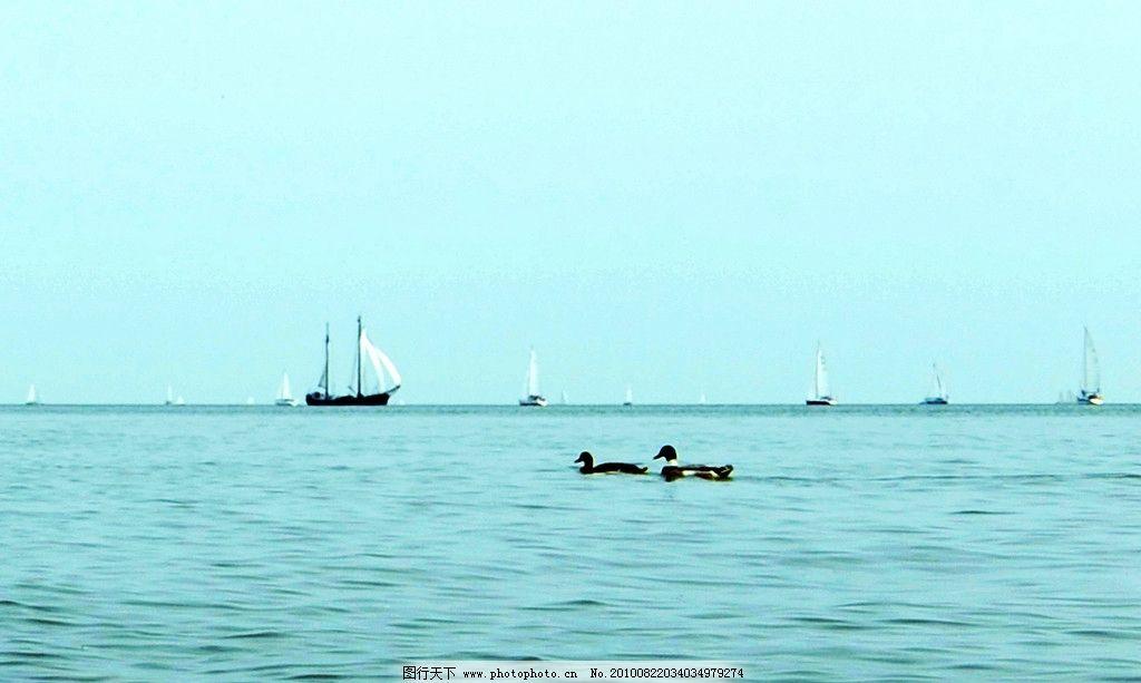 荷兰风光 国外 大海 船 帆船 野鸭 风景 国外旅游 摄影