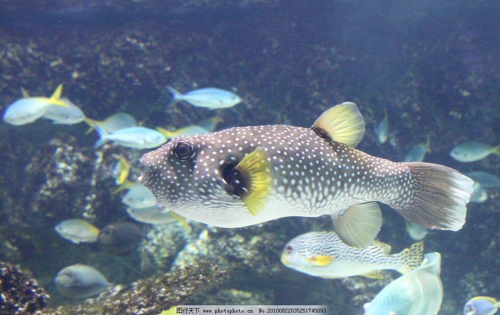 海洋鱼类 动物图片素材 水中动物 鱼类图片 鱼类素材 鱼类 海鱼