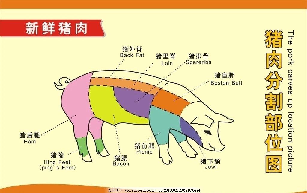 猪肉分割部位图图片