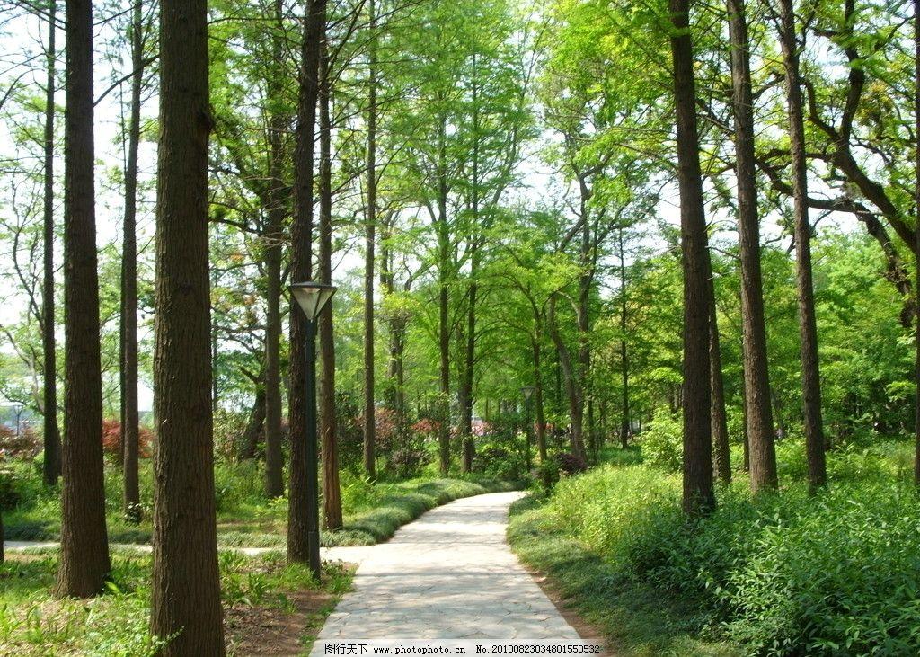 林间小路 树木 树林 林间小道 自然风景 自然景观 摄影