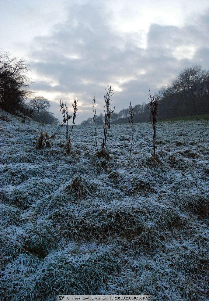 雪景 树林 风景 丛林风景 白色 雪白 雪地 雪 自然 风光 自然风光