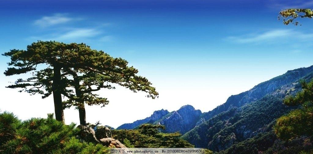 迎客松 远山 树 白云 蓝天 雾 云海 松树 高山迎客松 自然风景 自然
