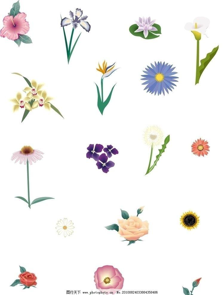 花朵 七色花 百合花 菊花 玫瑰花 蝴蝶花 牡丹花 ai格式 花朵矢量图