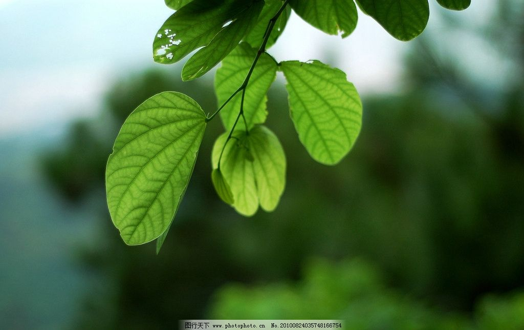 夏天的绿叶 微距 绿叶 夏天 色彩 脉络 生生不息 树叶 花草 生物世界
