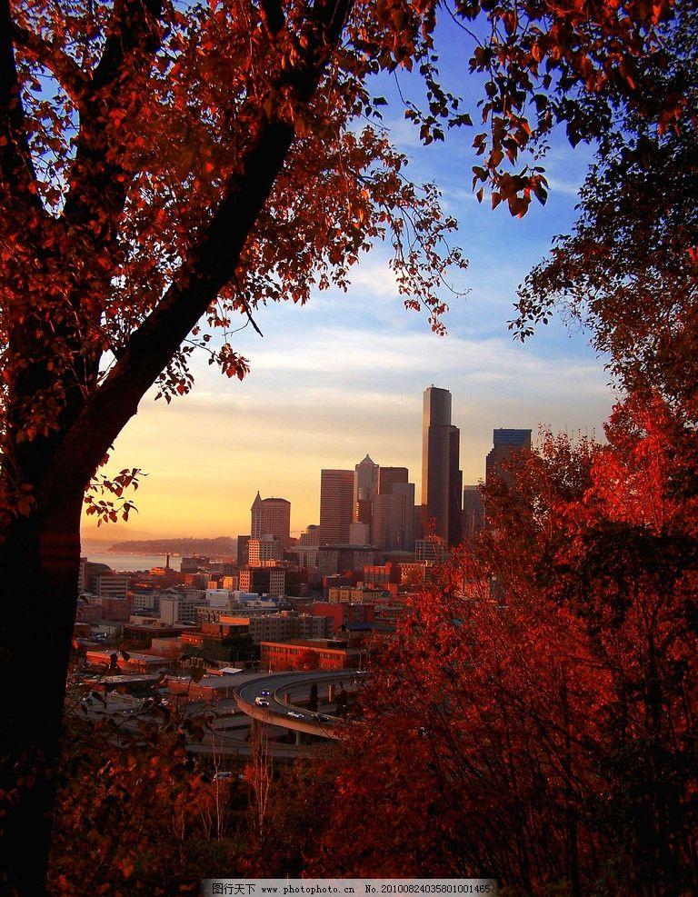 秋景高清图片,树林 树叶 枫叶 植物 城市 葭光 晚霞