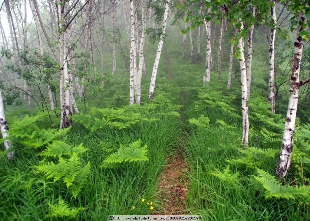 桌面高清壁纸 林木 林中小路 树木 树林 树木树叶 生物世界 设计 72