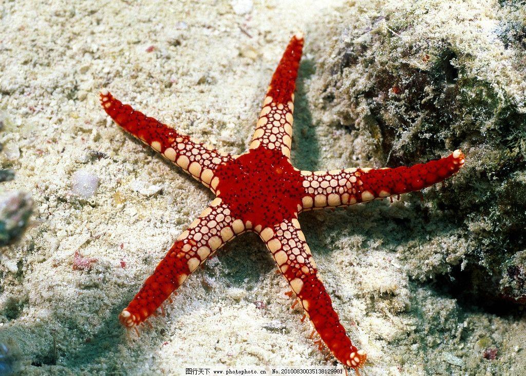 海底世界 红五角海星 透明海底 清爽 壁纸 海星 白色背景 海洋生物 生