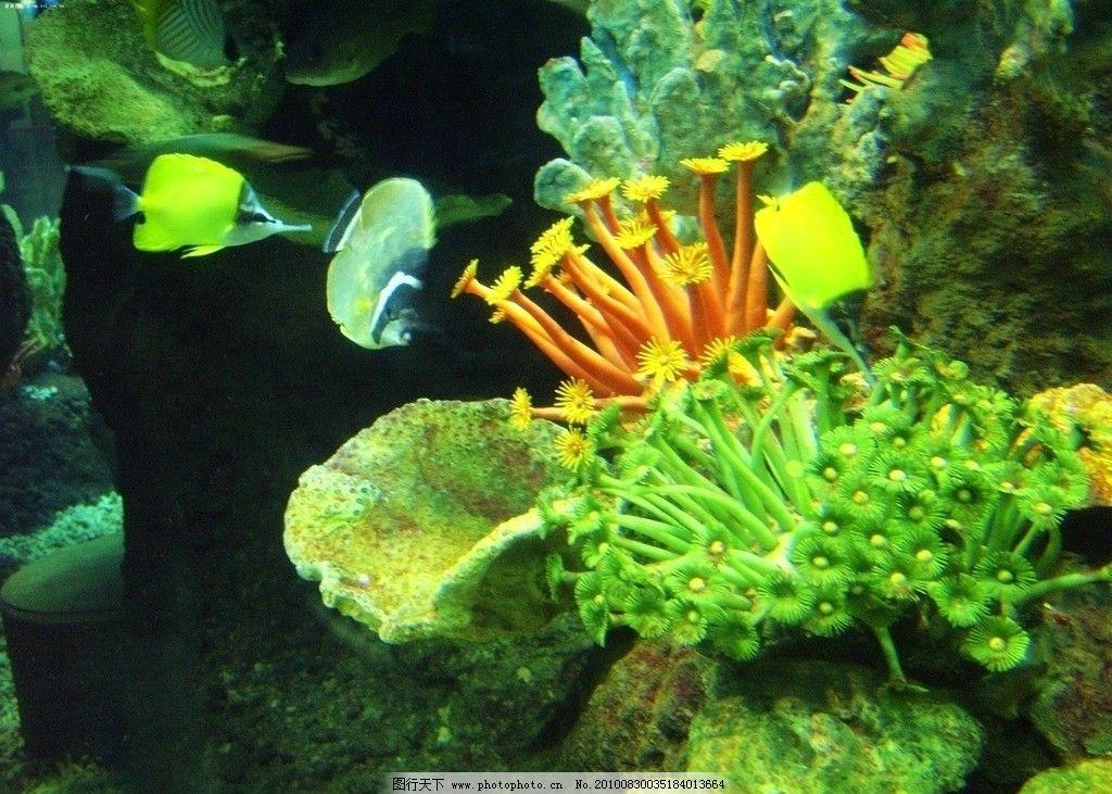 壁纸 动物 水草 水生植物 鱼 鱼类 1024_731