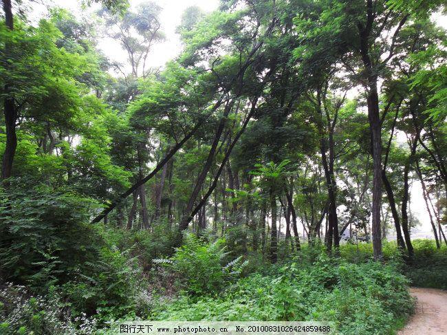 绿草 绿树 清晨 树林 树林 绿树 清晨 薄雾 绿草 图片素材 风景 生活