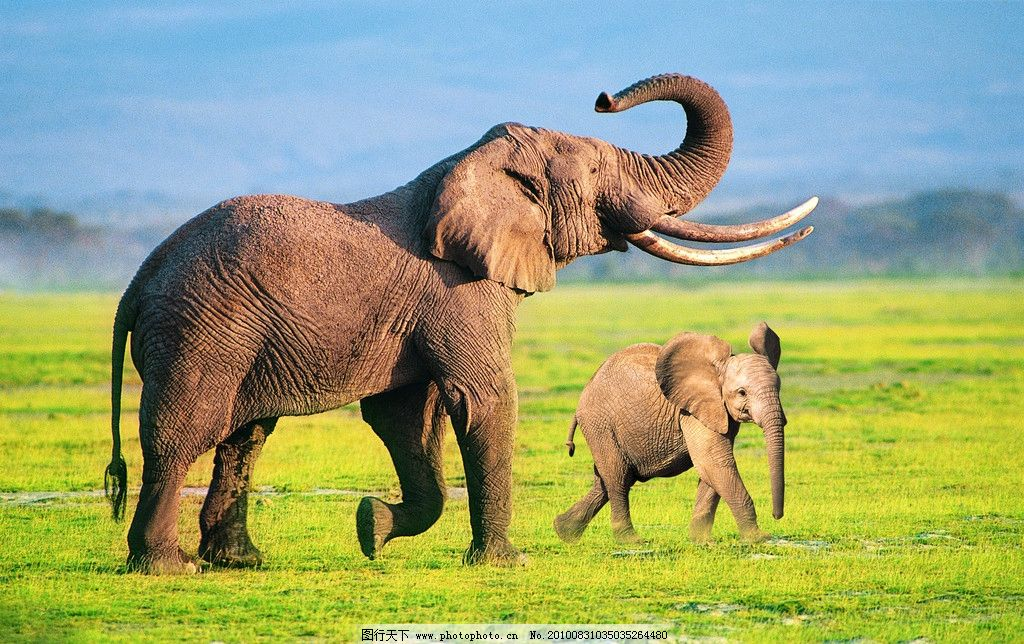 大象 蓝天 草地 山 云 自然风光 动物 野生动物 生物世界 摄影 150dpi