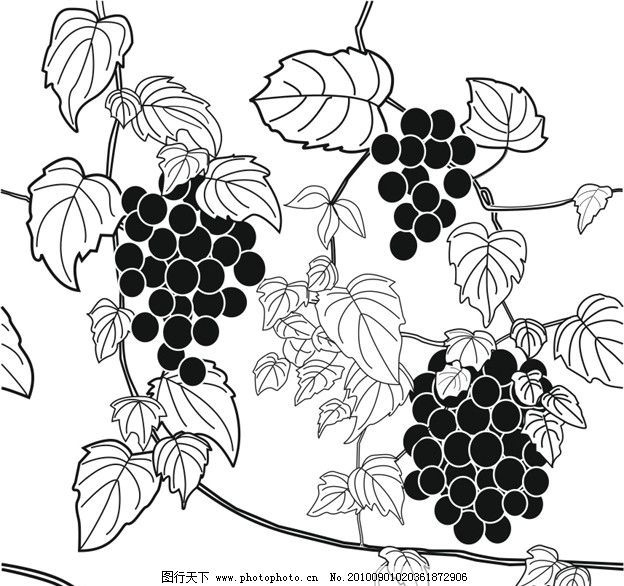 葡萄的简笔画步骤如下