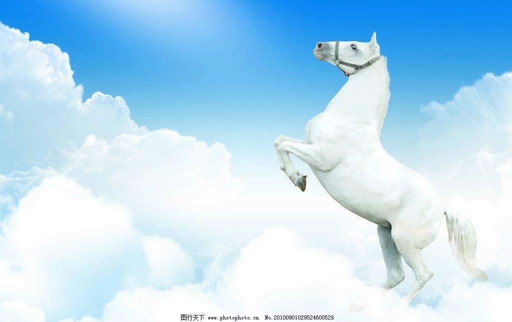 飞马高清图片,蓝天白云高清图片 动物 广告设计-图行