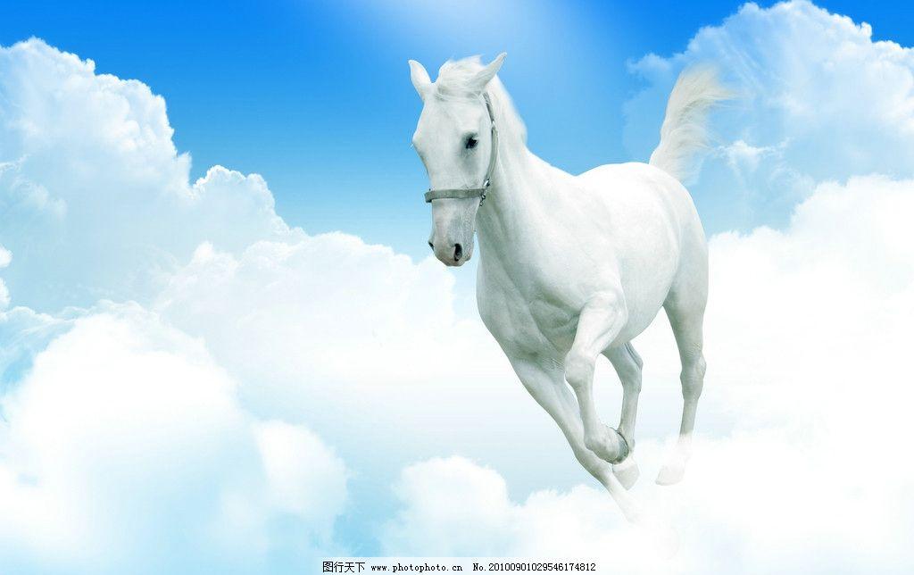 飞马高清 蓝天白云高清图片 动物 广告设计