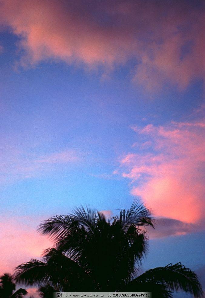 天空 霞云 椰子树 树叶 晚霞 树木 自然风景 自然景观 摄影 300dpi
