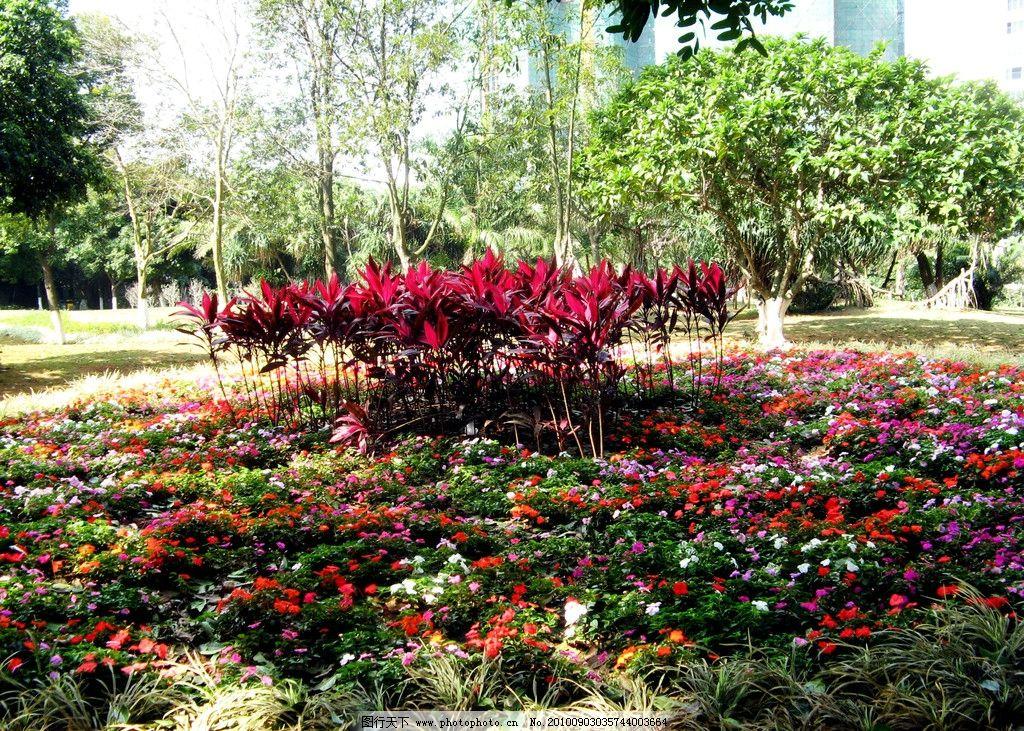 花卉 风景 园林 植物 花朵 绿化 绿叶 花香 盛开 观赏 芬芳