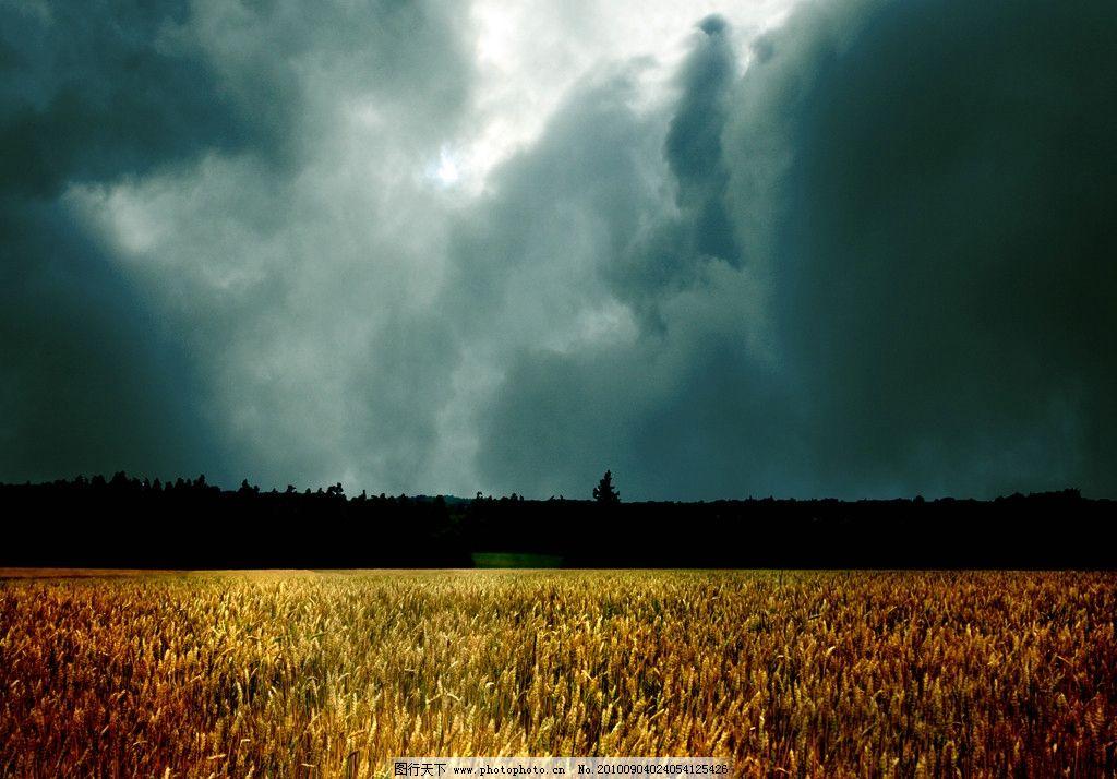 天空 麦田/灰暗天空下的麦田图片