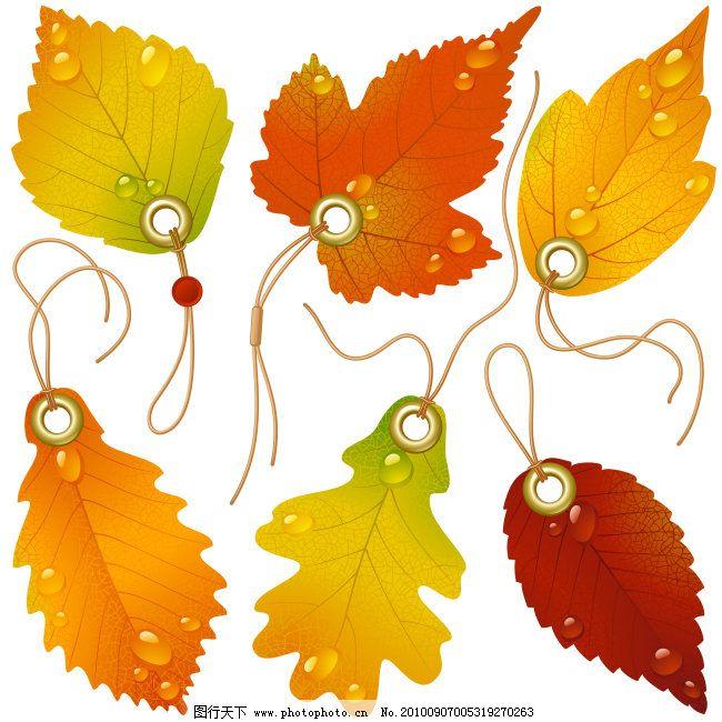 枫叶标签免费下载 枫叶 矢量图形 树叶 树叶 枫叶 标签形状 矢量图形