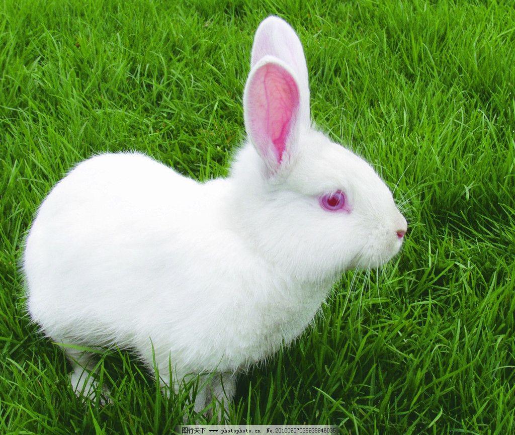壁纸 动物 兔子 1024_865