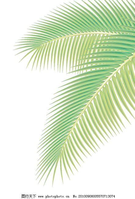 套绿色的棕榈树叶矢量01