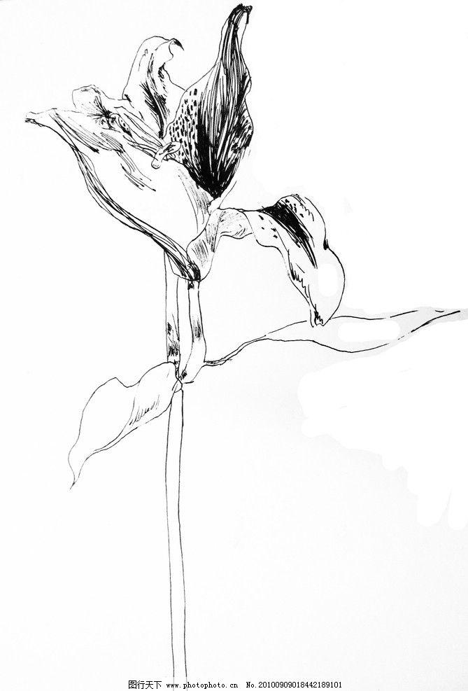 手绘花朵 手绘 植物 花朵