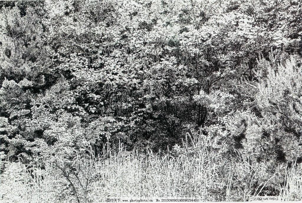 树林 钢笔画 线条 风景画 黑白画 线稿 线描 中国画 树 树木 绘画书法